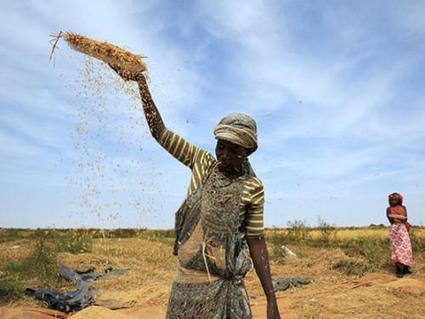 La Mauritanie engage des réformes foncières pour atteindre son autosuffisance rizicole - Agence Ecofin   agrophil   Scoop.it