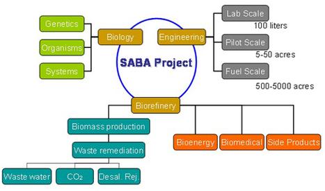 Saudi Arabia Biorefinery from Algae Project :Algae Industry Magazine | Algae | Scoop.it