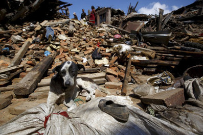 Nepal:  World Animal Protection Appeal To Help Animals In Disaster Area. | GarryRogers Biosphere News | Scoop.it