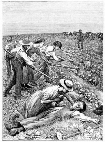 Choosing not to protect child farmworkers   Community Village Daily   Scoop.it