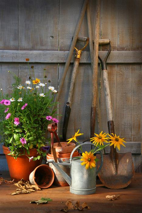 Mental and emotional benefits of gardening | concierge medicine | Scoop.it