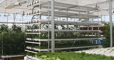 FarmTek Offers Hydroponic Fodder Workshop | The Leamington ... | Vertical Farm - Food Factory | Scoop.it