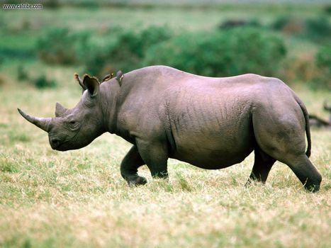 Poachers make 2012 a deadly year for Africa's rhinos, elephants | The Glory of the Garden | Scoop.it