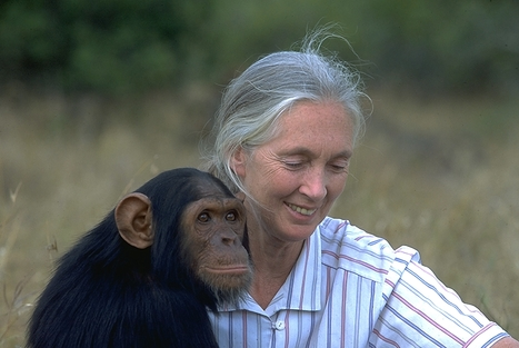 Jane #Goodall reacts to #billionaire #Murdoch buying #NationalGeographic #unbelievable | Messenger for mother Earth | Scoop.it