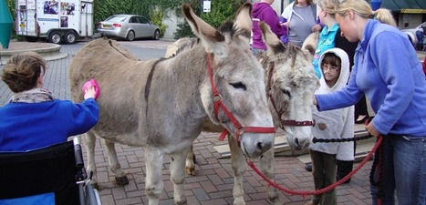 Rockinghorse | Donkeys visit the Alex | Brighton and Sussex University Hospitals NHS Trust | Scoop.it