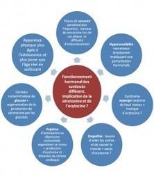 Les personnes à haut potentiel ont-elles un fonctionnement hormonal différent ? | Haut Potentiel Intellectuel (HPI, EIP, surdoués, adultes à haut potentiel ..) | Scoop.it