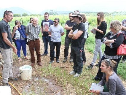 Une formation pour lutter contre la mouche de l'olive | Les colocs du jardin | Scoop.it