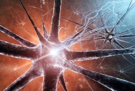 Genetic Variations Found In The Brain - Science News - redOrbit | Darwinian Ascension | Scoop.it