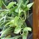 Mur végétal en intérieur et extérieur | Décoration | Scoop.it
