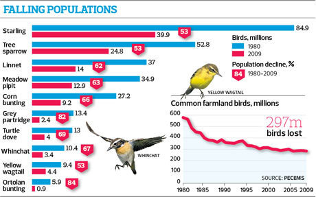 How EU farming policies led to a collapse in Europe's bird population | The Barley Mow | Scoop.it