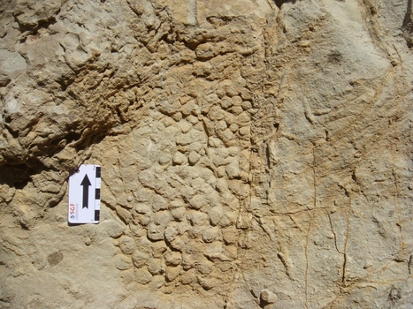 Unique skin impressions of last European dinosaurs discovered in Barcelona | Conformable Contacts | Scoop.it
