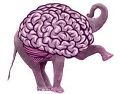 The Surprising Brain Differences Between Democrats and Republicans | With My Right Brain | Scoop.it