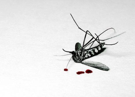 Top 10 des manières de te débarrasser du moustique qui te bousille ta nuit | My global Bordeaux | Scoop.it