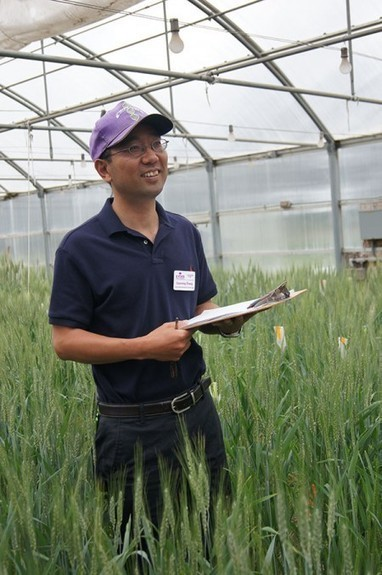 The long and short of wheat breeding in Hays | Kansas Wheat | Plant Biology Teaching Resources (Higher Education) | Scoop.it