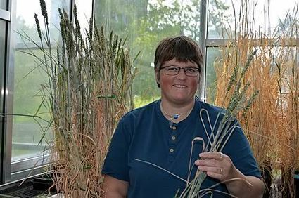 Wheat Research to help Booming Population | University of Essex in the news | Scoop.it