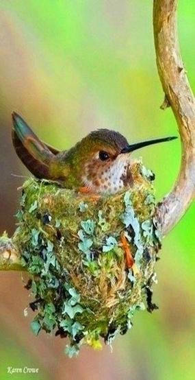 Les oiseaux... | The Blog's Revue by OlivierSC | Scoop.it