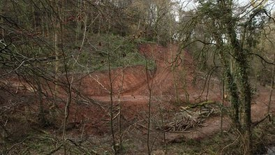 Philip Day woodland damage challenge rejected - BBC News | Trees and Woodlands | Scoop.it