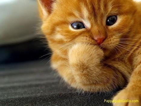 Gattini divertenti (100 foto)   ANIMALI   Scoop.it