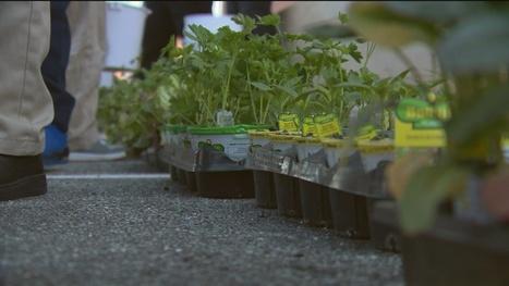 Baltimore school teaches healthy eating early | School Gardening Resources | Scoop.it
