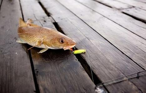Saumon de Norvège et crevettes d'Equateur: D'où vient le poisson que nous mangeons? | Biodiversité | Scoop.it
