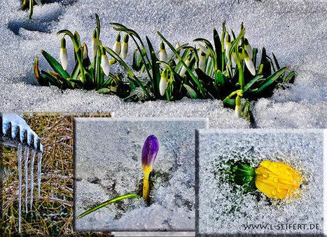 Bilder Frühlingsblumen | kostenlose-Bilder | Scoop.it