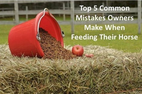 Five Common Mistakes Made When Feeding A Horse | all things horsey | Scoop.it