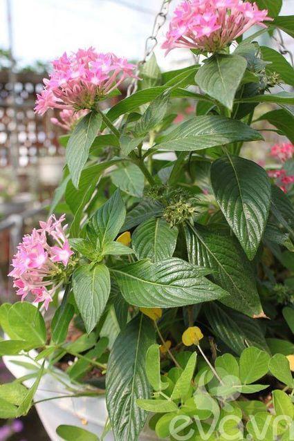 Vườn quê xanh mát trăm hoa đua nở giữa lòng Thủ đô-Diễn đàn nội thất | Noithatmax.com | Scoop.it