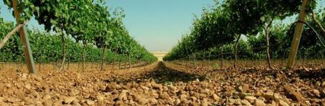 Le vignoble espagnol tempère les pronostics de vendanges généreuses | Le vin quotidien | Scoop.it