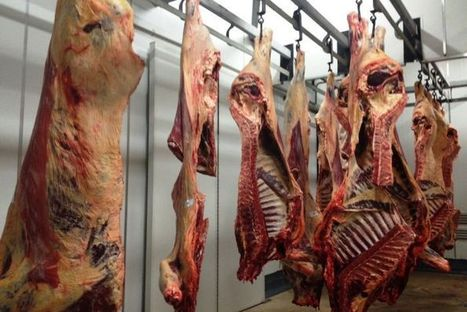 Beef production down 14 per cent | Morgan | Scoop.it