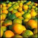 Il bergamotto, prezioso patrimonio botanico della costiera di Reggio Calabria | Farm-to-Table Italy | Scoop.it