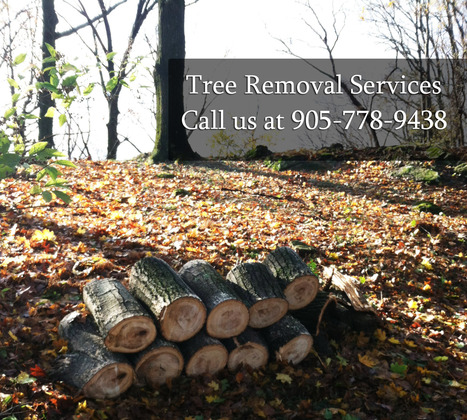 Reasons for having Tree Removal Services - Gerald's Tree Service Guide   Tree Removal   Scoop.it
