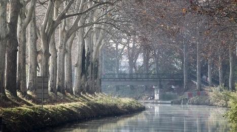 Toulouse : Un vaccin pour sauver les platanes du canal du Midi ? | Biodiversité & Relations Homme - Nature - Environnement : Un Scoop.it du Muséum de Toulouse | Scoop.it