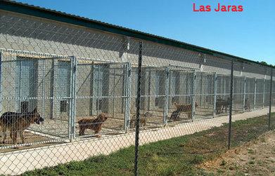 El juez no considera maltrato la congelación de mascotas - Heraldo de Aragon | Pablo Galgo | Scoop.it