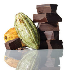 The Future of Chocolate | Agricultural Biodiversity | Scoop.it