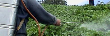 Pesticides, nous sommes plus exposés en France qu'ailleurs - consoGlobe | Actus Bien-être - Santé | Scoop.it