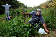 Vegetable Gardens Are Booming in a Fallow Economy | Garden Libraries | Scoop.it
