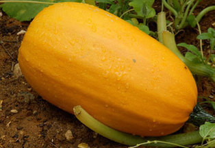 Fall Produce Picks from the Academy of Nutrition and Dietetics | Health | Scoop.it