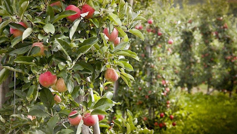 SHFT | Seattle's Food Forest is Open for Foraging | Yellow Boat Social Entrepreneurism | Scoop.it