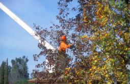 Landscaping Basic Principles   Aspen Tree Service   Scoop.it