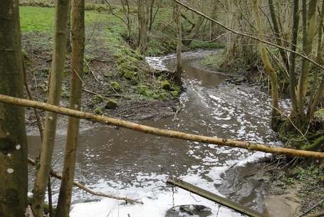 Pollution au lisier sur le ruisseau d'Hanzinne à Gerpinnes | La pollution des eaux dans le monde | Scoop.it