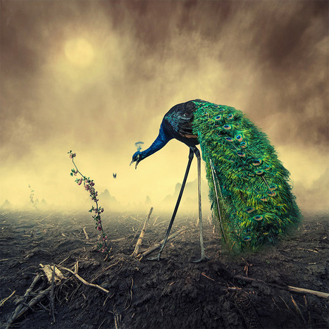 Surreal Photo Manipulations by Caras Ionut | Colossal | ceramics and art | Scoop.it