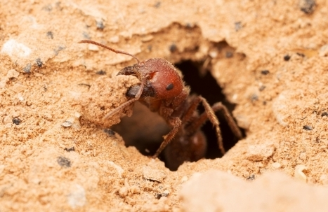 Ants May Boost CO2 Absorption Enough to Slow Global Warming | Sustainable Futures | Scoop.it