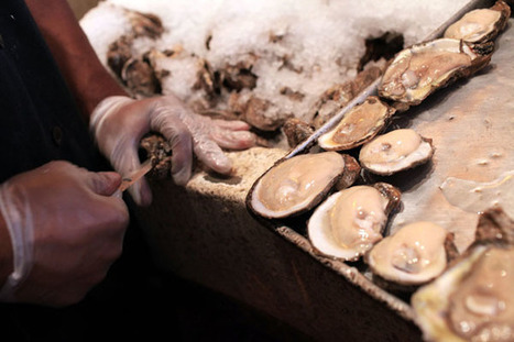 B.C. shellfish farmers fear polluted sea water could ruin oyster and scallop beds | Changing Chemistry - The People Impacted by Ocean Acidification | Scoop.it