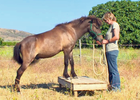 Skyros ponies - a rare horse breed - critically endangered | Communicating Science | Scoop.it