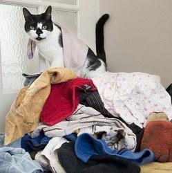 Roi du cambriolage, un chat vole les voisins pour gâter ses maitres! (Vidéo) | Funny and crazy cats | Scoop.it