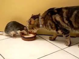Life is Full of Surprises... | catnipoflife | Scoop.it