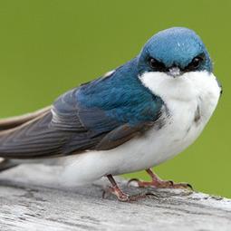 Knowing More About Bird Behavior and Bird Houses | MySpy Birdhouse | Scoop.it