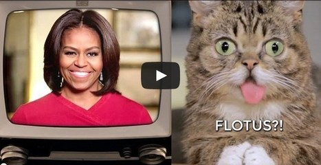 VIDEO. Lil Bub a une nouvelle esclave dans son escarcelle : Michelle Obama. — | Les chats c'est pas que des connards | Scoop.it