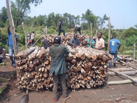 Le paysan au cœur de la destruction des forêts au Katanga | décroissance | Scoop.it