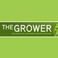 Texas growers take aim at greening disease | botany | Scoop.it